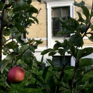 Frydendalsvej havens æbletræ
